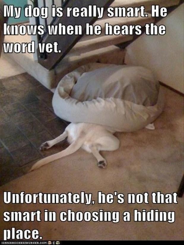 dog choosing the hiding place