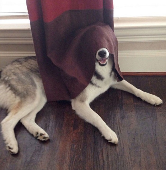 The Dogs Think That This Is The Best Place To Hide Themselves (15 pictures)