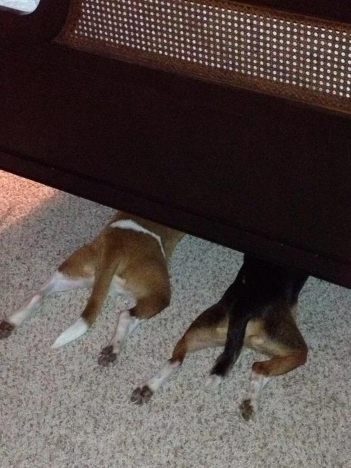 dogs hiding themselves