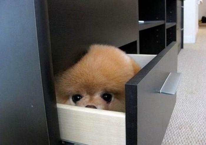 funny eyes dog hide