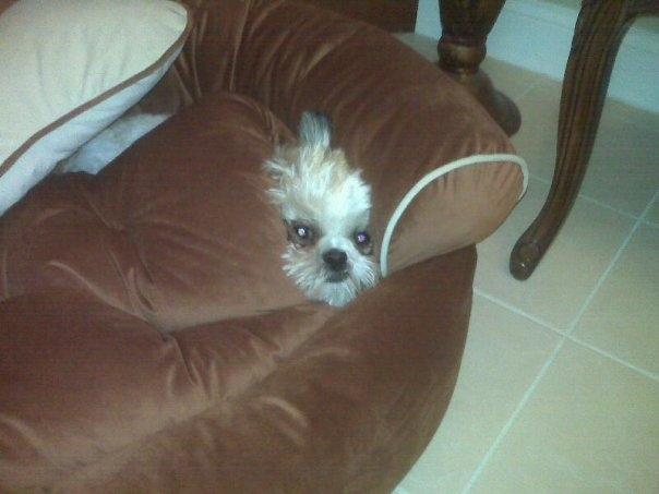 funny hiding dog so cute