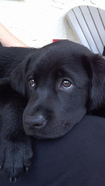 Cute puppy, eyes