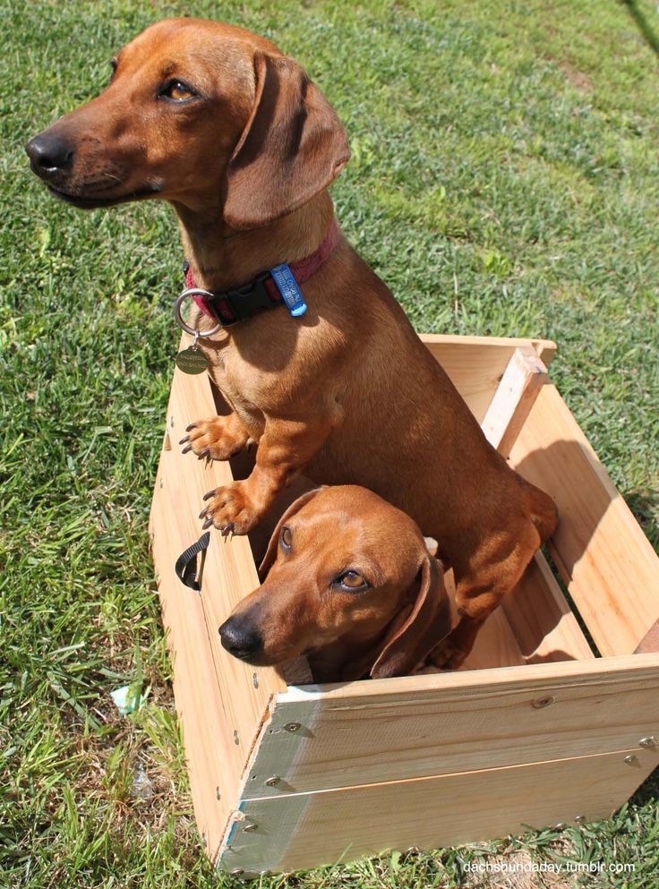 Fun in a box, dogs