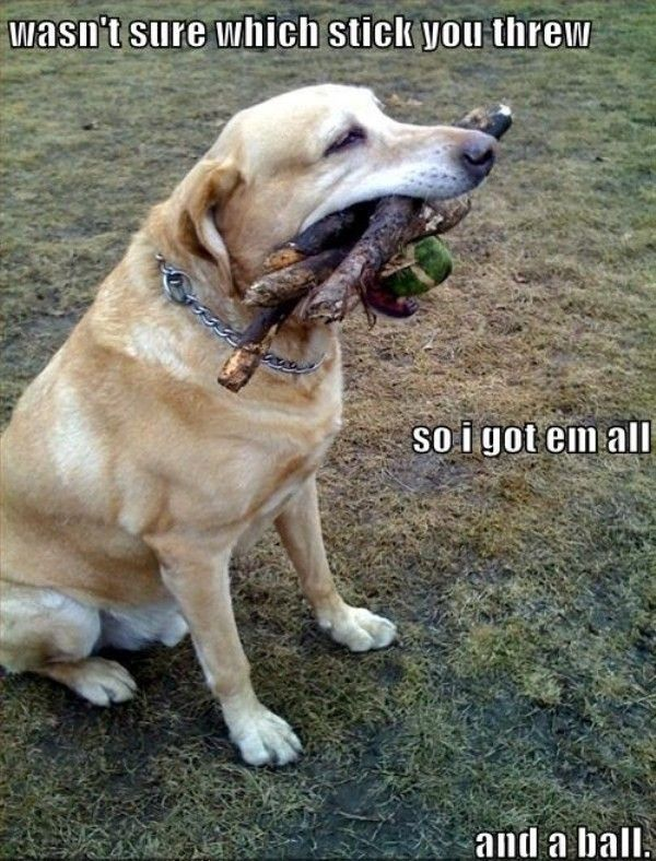 What S A Good Nature Treat For Dogs