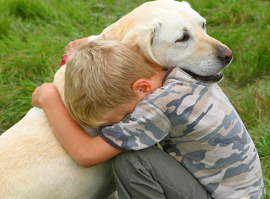 Labradors reduce stress
