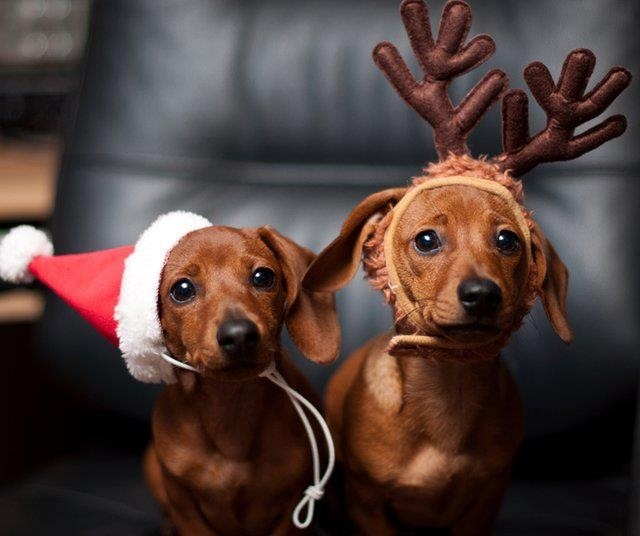 9 Reasons Why Dachshunds Are The Best Dogs Ever