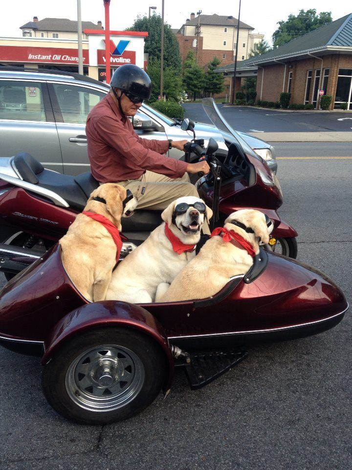 Dave's Pics: Motorbikes and Sidecars |Funny Motorcycle With Sidecar