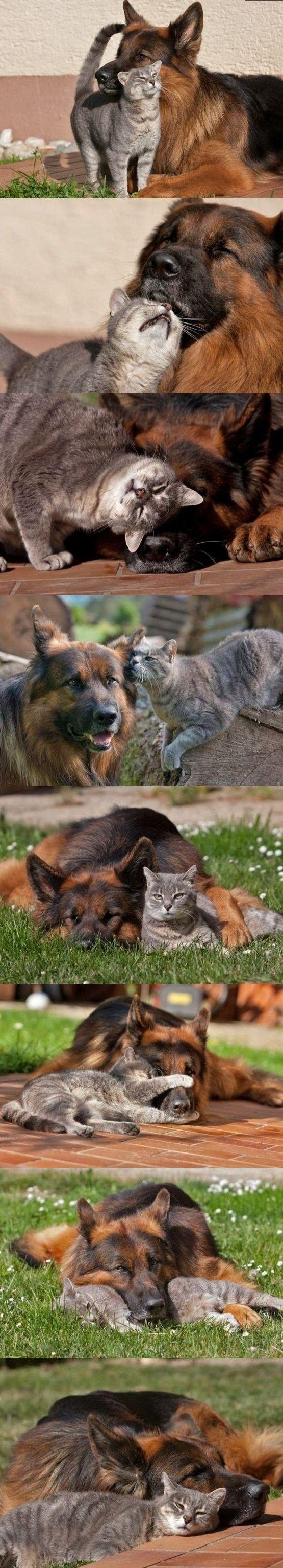 best friends, dog, cat