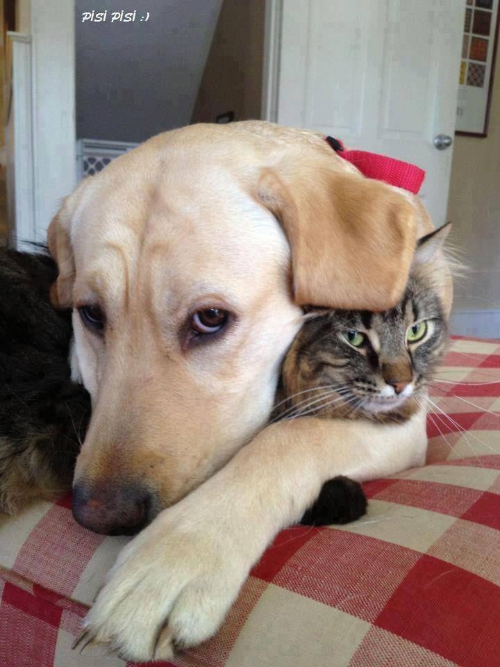 cats lab cute friends