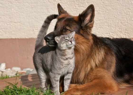 cute cat with dog pics
