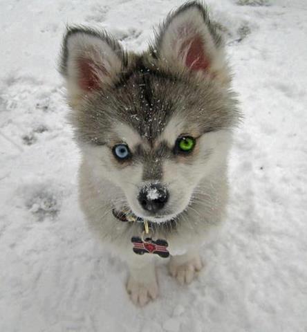 cute puppy eyes pics