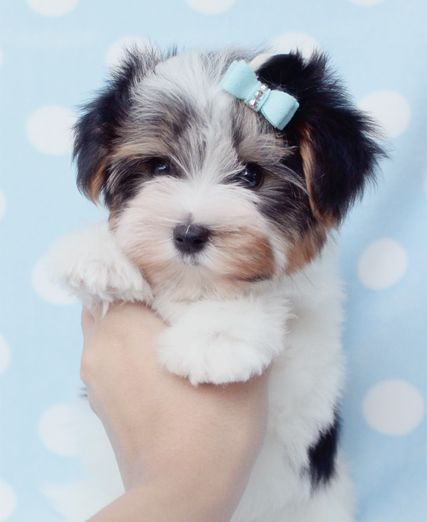 cute puppy face awesome pet