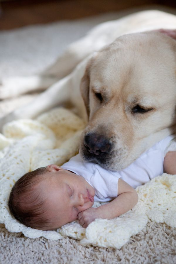 dog protect you kid cute