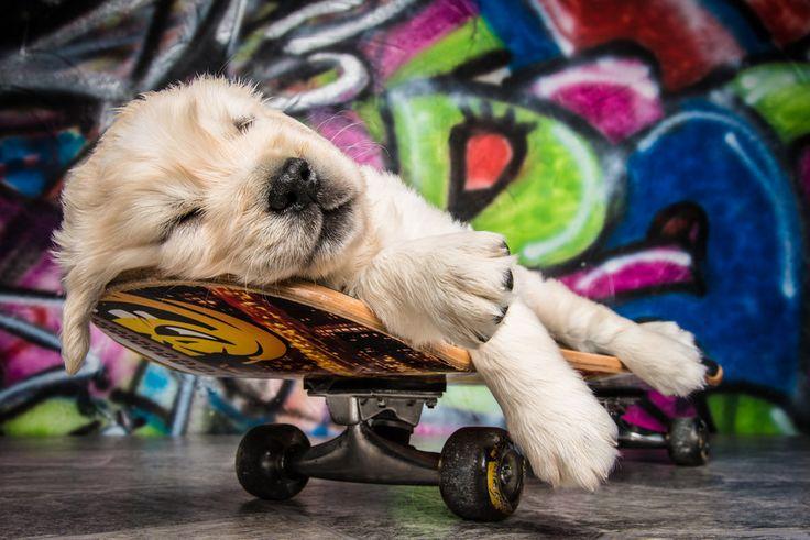 dog rest skateboard