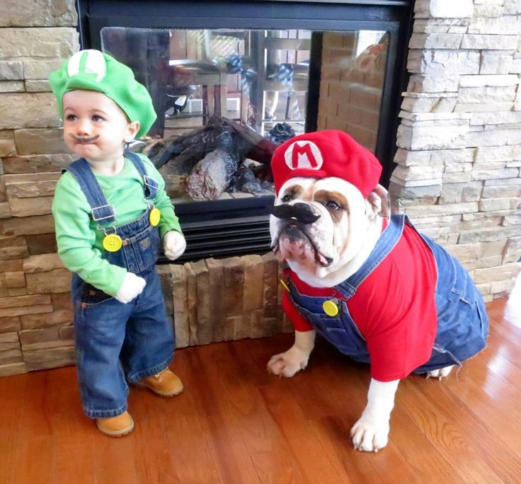 funny costumes english bulldogs kid