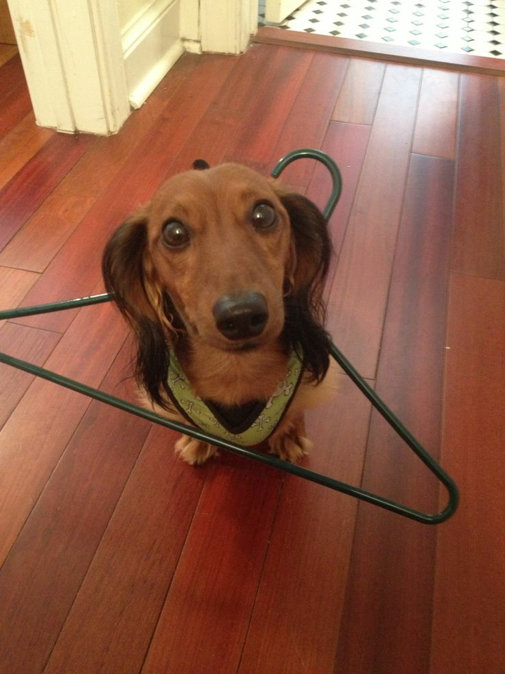 12 Majestic Dachshunds Who Totally Redefine Perfection