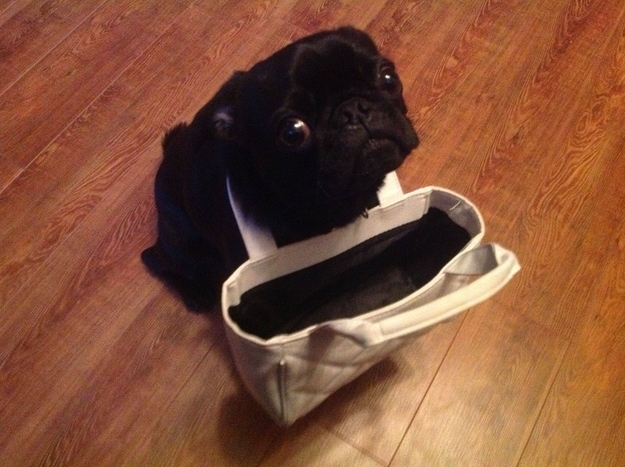 funny pug cute bag