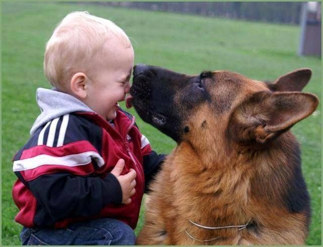 Can Dogs Feel Love Towards Humans