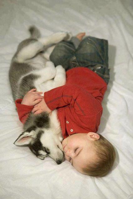 kid husky friends