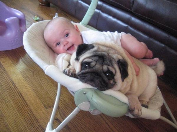 pug and child
