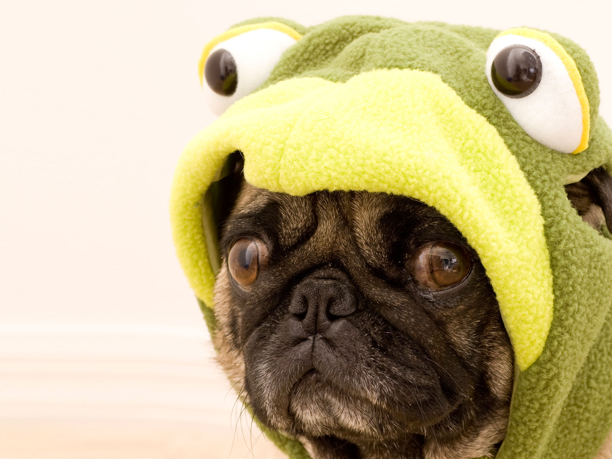 11 Reasons That Pugs Are The Funniest Dogs In The World
