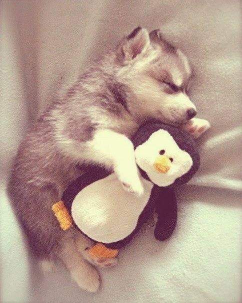puppy sleep cute