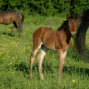 A baby female horse