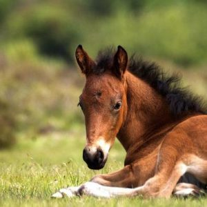 A baby male horse