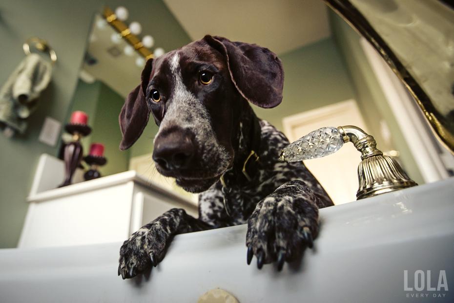 beautiful face cute pics dog pointer
