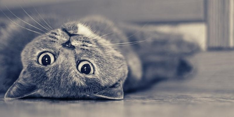 12 Reasons Why No One Should Ever Have British Shorthairs
