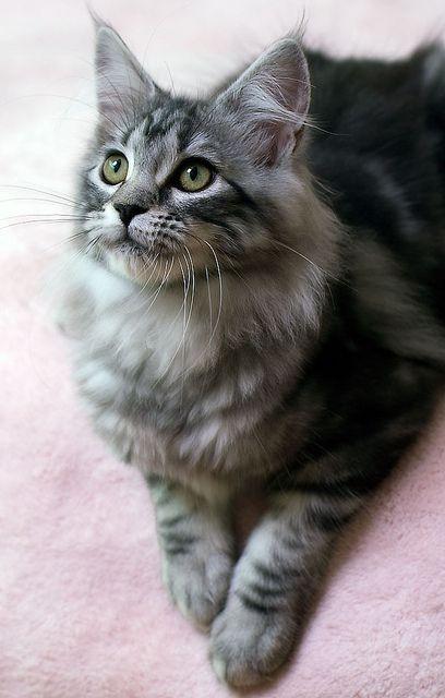 cat listen face pics