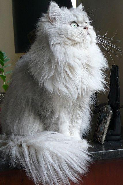 cat listen pics