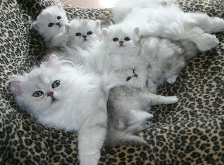 cute kitties cat awesome