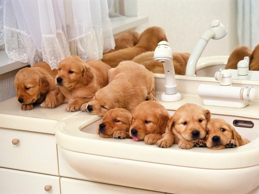 5 Tips for Choosing Pet Insurance 20