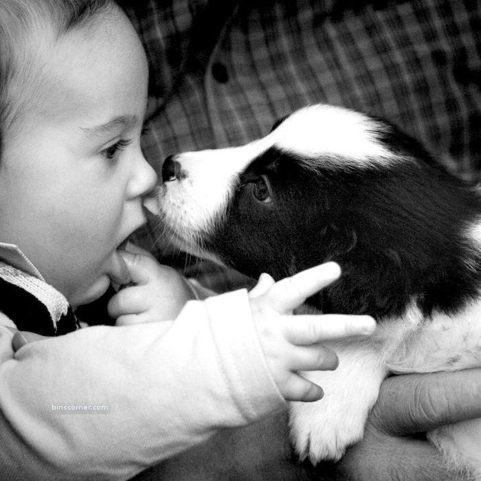 cute puppy kid