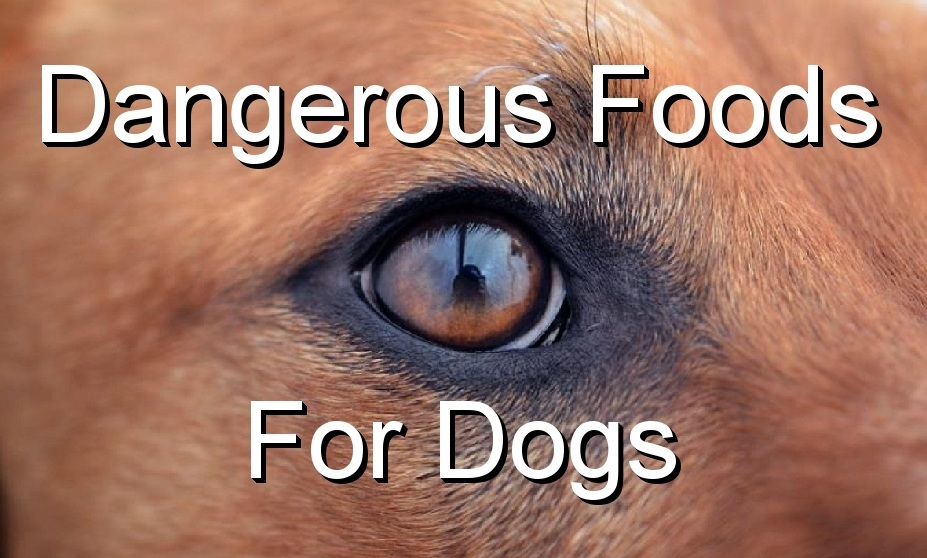 Do You Know That Grapes, Raisins Or Nuts Can Be Lethal For Your Dog?