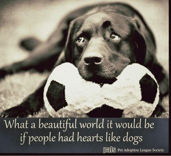 Dog Quote Labrador Pics