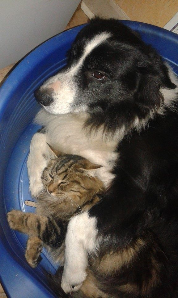 dog with kitty