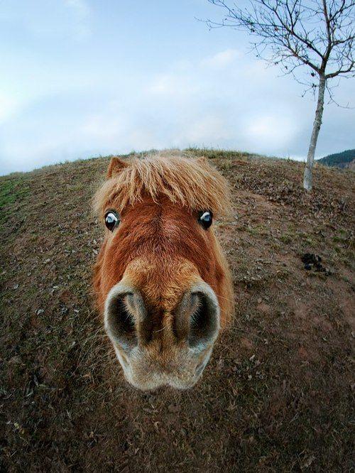 face eyes horse