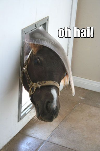 funny horse face