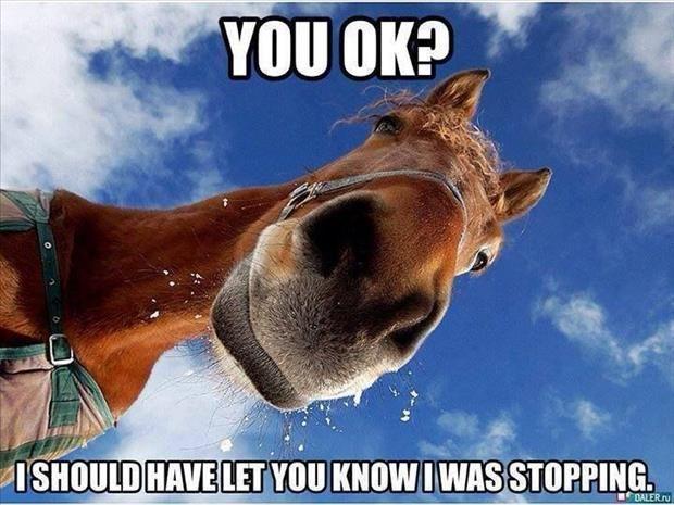 funny horse photo face