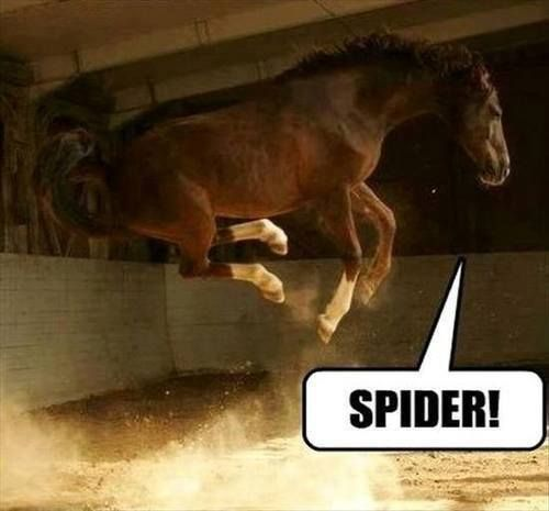 funny jump horse spider