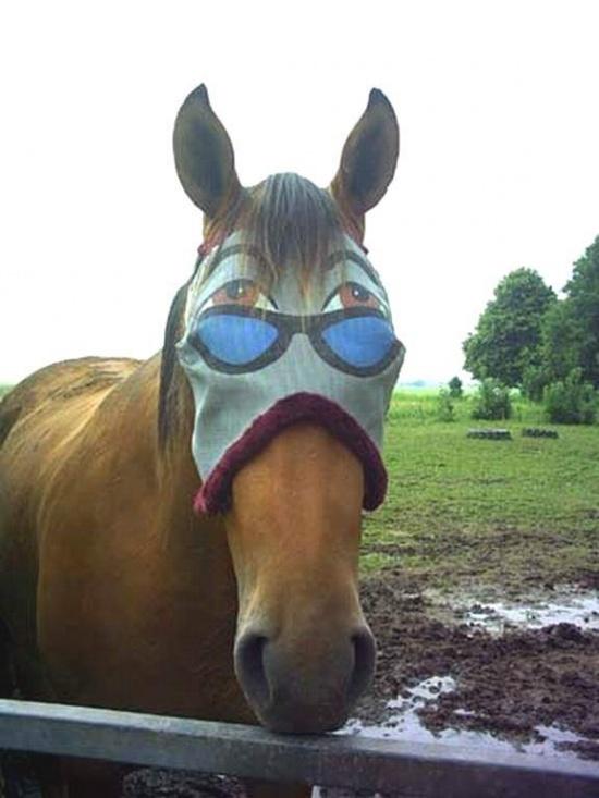 funny mask horse