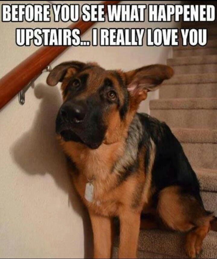 funny sayings dog