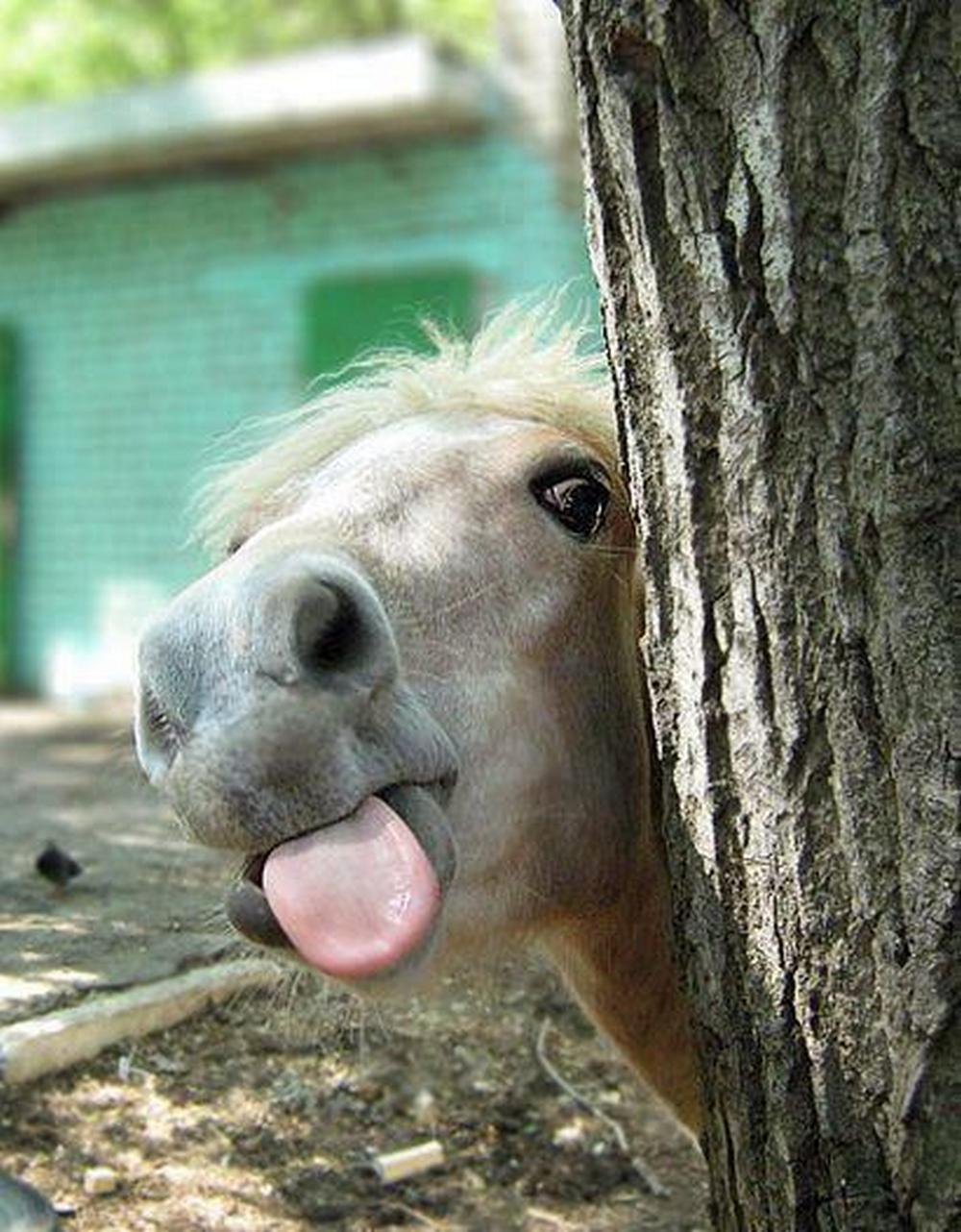 funyn horse tongue