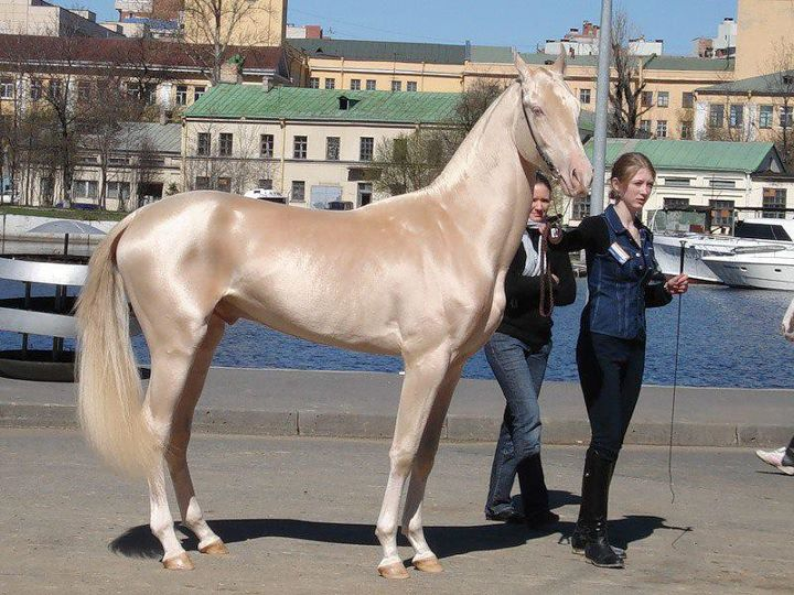 horse color pics