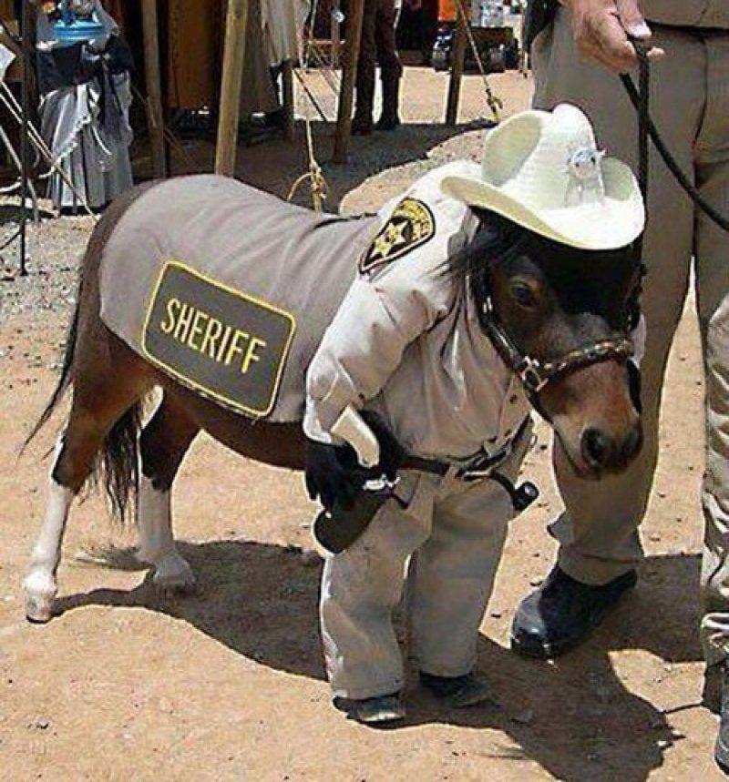horse sheriff funny