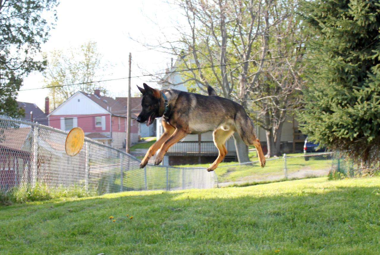 jumping dog pics funny