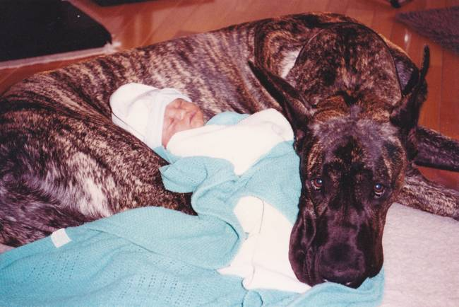 kid dog great dane