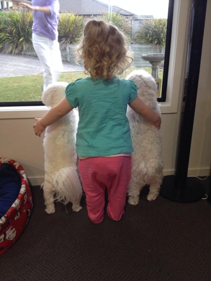 kid dogs funny window
